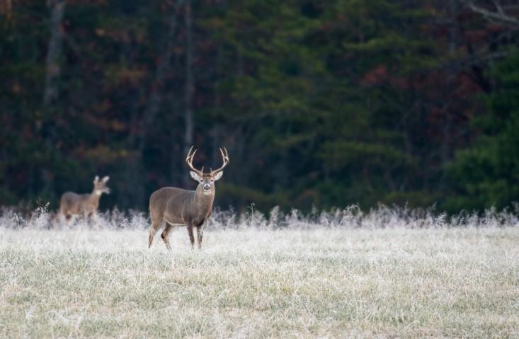 The Best Rainwear for the 2021 Deer Hunting Seasons and Beyond